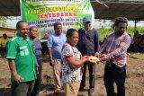 Fraksi Membangun Papua DPRP sediakan lahan berkebun