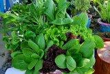 Jalasenastri Armada II prakarsai parsel sayuran tingkatkan imunitas saat pandemi