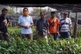 DPRD ajak pemerintah Sulbar majukan pengusaha lokal