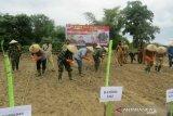 Danrem 143/HO bersama Bupati Kolaka tanam jagung untuk menjaga ketahanan pangan