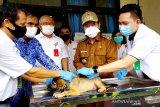Vaksinasi rabies di Bartim dilakukan di Puskeswan hingga kunjungan ke desa