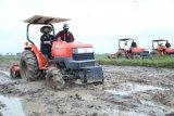 Mentan ingin pastikan produksi pertanian di tengah COVID-19