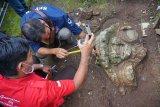 Staf arkeologi BPCB Trowulan mengukur fragmen arca pala yang ditemukan di Desa Sidorejo, Tulungagung, Jawa Timur, Jumat (19/6/2020). Fragmen batu kapur berukir berbentuk kepala Bethara Kala berukuran 110 x 134 x 30 cm dan ukuran 85 x 110 x 26 cm itu diduga merupakan objek cagar budaya peninggalan zaman Kerajaan Singasari. ANTARA FOTO/Destyan Sujarwoko/nym