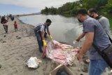 Jasad bayi berbungkus plastik ditemukan di muara sungai Desa Meninting