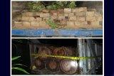 Polres Barito Utara tangkap dua sopir truk pengangkut kayu ilegal