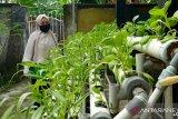 Pandemi, NTB memastikan ketersediaan pangan masih aman