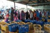 Aktivitas lelang ikan TPI di  Batang sepi
