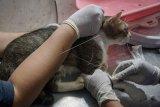 Pengobatan dan donor darah kucing