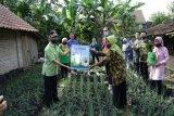 Kelompok  Wanita Tani Pringsewu budidayakan bawang merah di polibag