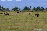 51,2 persen wilayah Indonesia sudah alami musim kemarau