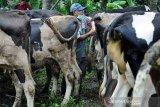Perdagangan ternak kurban di Boyolali masih lesu
