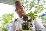 Budi daya bonsai kelapa makin diminati