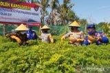 Polda DIY tanam cabai untuk dukung ketahanan pangan