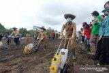 Bupati Gumas dan Poktan Sejahtera tanam perdana jagung hibrida