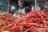 Di era normal baru, harga cabai merah di Pasar Raya Padang masih murah hanya Rp16.000/kg