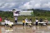 Target sasaran tanam padi sawah di Gumas capai 100 hektare