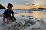 Objek wisata Pulau Saronde dibuka lagi dan harus menerapkan protokol kesehatan