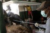 Permintaan ternak sapi untuk kurban ke DKI Jakarta meningkat