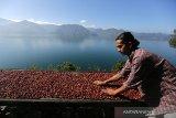 Ekspor kopi Gayo anjlok 70 persen akibat COVID-19