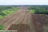 Jaringan irigasi Food Estate di Kalteng akan didesain ulang oleh Menteri PUPR