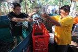 Warga penyandang disabilitas membudidayakan ikan lele