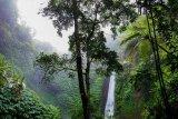 KLHK: Terjadi regenerasi alami tumbuhan dan hutan saat pandemi COVID-19