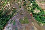 DPR: Pelaku usaha pertanian prioritaskan tenaga lokal