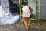 Kasus DBD di Kabupaten Gowa turun signifikan