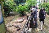 Kebun Binatang Bandung masih sepi pada bhari pertama fase AKB