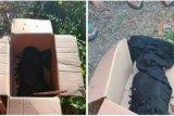 Warga di Loteng digegerkan kembali temuan mayat bayi di pinggir jalan desa