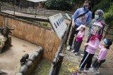 Pengunjung melihat koleksi beruang di Kebun Binatang Bandung (Bandung Zoological Garden), Bandung, Jawa Barat, Sabtu (27/6/2020). Setelah lebih dari dua bulan ditutup akibat pandemi COVID-19, Kebun Binatang Bandung kembali dibuka untuk umum dengan menerapkan protokol kesehatan pada masa pemberlakuan normal baru atau adaptasi kebiasaan baru. ANTARA JABAR/M Agung Rajasa/agr