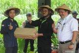 Menteri Pertanian jamin ketersediaan pangan hingga akhir tahun