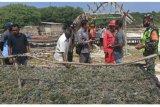 PP klarifikasi keluhan petani rumput laut di NTT