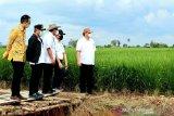 Gubernur jabarkan berbagai manfaat 'food estate' di Kalteng
