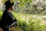 Tiga hari diawasi, BKSDA  Agam tak temukan jejak harimau di Sungai Pua