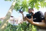 Pelajar Madrasah Aliyah Ciptakan Drone Berdaya Asam Pohon Pepaya