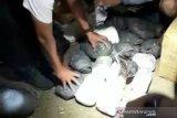 Polda Sulteng gagalkan 25 kg narkoba masuk Palu