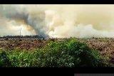 Polisi selidiki kebakaran lahan gambut di Pelalawan