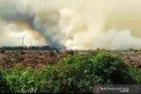 Kebakaran lahan gambut terjadi di Pelalawan Riau