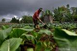 Anggota DPR sorot ekspor  buah-sayur, namun masih mengimpor dari China