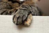 Kucing di Jepang diberi penghargaan setelah bantu selamatkan warga
