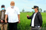 'Food estate' di Kalteng tak akan mengganggu lingkungan