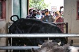 Lampung bentuk satgas pengawas hewan kurban