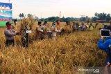 Wagub Sumbar harapkan Kota Solok pertahankan areal sawah