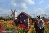 Petani Parigi Sulap Kebun Terserang Hama Menjadi Taman Bunga