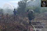 Puluhan hektare lahan di Aceh Barat terbakar
