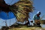 REALISASI PENGADAAN BERAS. Pekerja memanen padi di Kajang, Sawahan, Kabupaten Madiun, Jawa Timur, Senin (22/6/2020). Berdasarkan data di Badan Ketahanan Pangan Kementerian Pertanian, dari rencana pengadaan pangan pada 2020 sebanyak 1,4 juta ton setara beras terealisasi 607.795 ton setara beras pada 20 Juni 2020 atau 43,41 persen dari target. Antara Jatim/Siswowidodo/zk