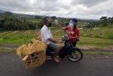 Petugas memeriksa suhu tubuh petani di kawasan obyek wisata Jatiluwih, Tabanan, Bali, Rabu (1/7/2020). Pengelola Daya Tarik Wisata (DTW) Jatiluwih mewajibkan penerapan protokol kesehatan COVID-19 bagi pengunjung dalam persiapan normal baru menjelang pembukaan obyek wisata itu pada 9 Juli 2020. ANTARA FOTO/Nyoman Hendra Wibowo/nym.
