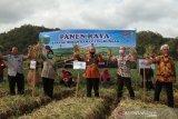 Bupati Bantul panen raya bawang merah ramah lingkungan