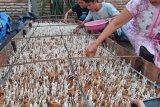 Budi daya jamur manfaatkan limbah tongkol jagung di tengah pandemi